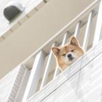 dog-apart001