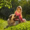 超大型犬6種類はどれも希少犬種!それぞれの性格、飼い方、寿命は?