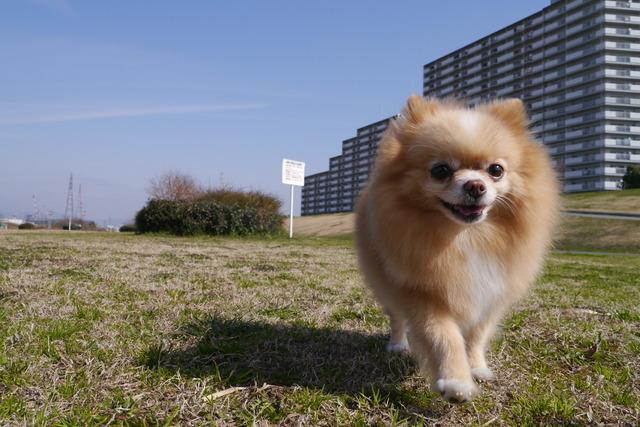 dog-apart002