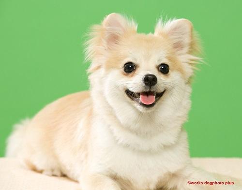 ミックス犬の人気ランキング!10種類それぞれの特徴、魅力、雑種